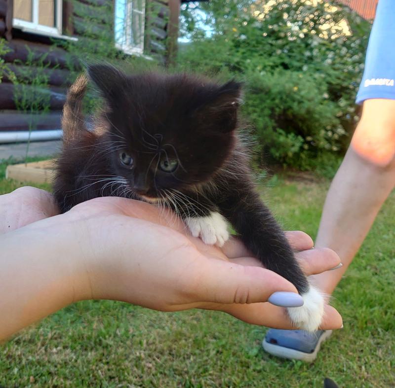 7 котёнок 3.jpg