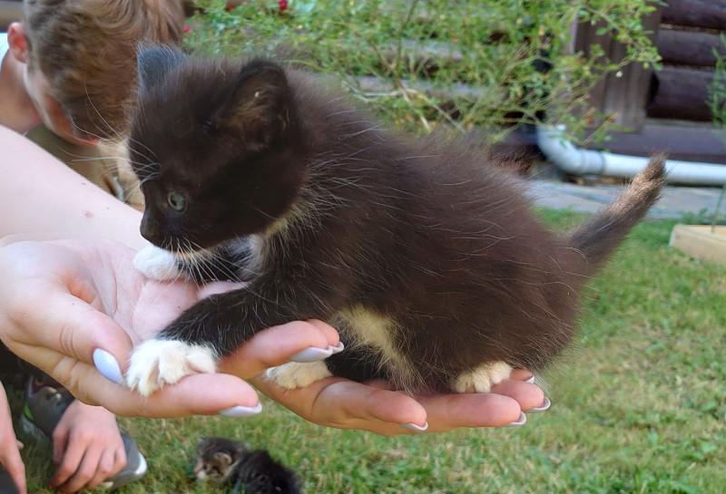 8 котёнок 1.jpg