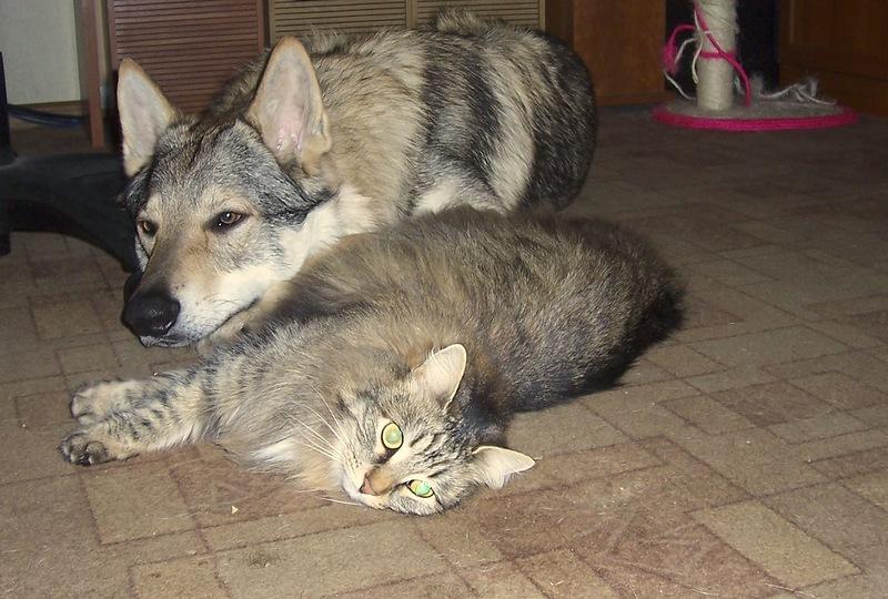 Канис и кошки 2.jpg