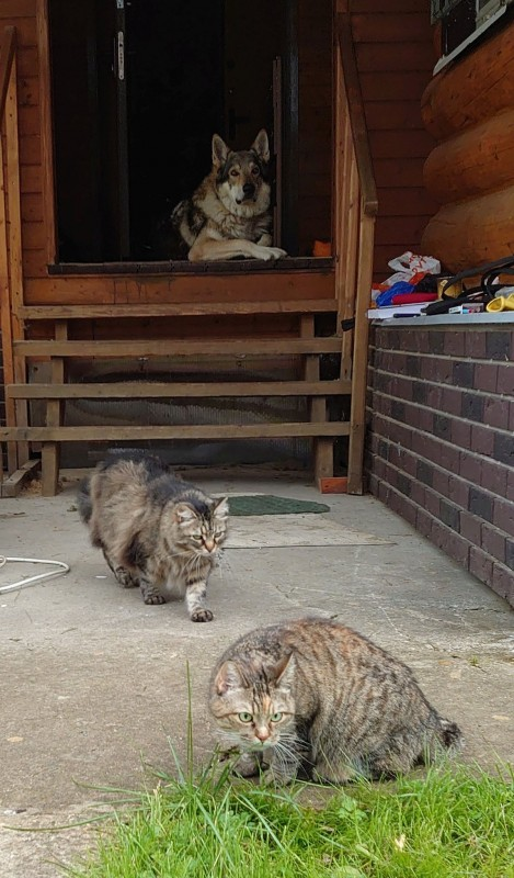 Канис и кошки 5.jpg