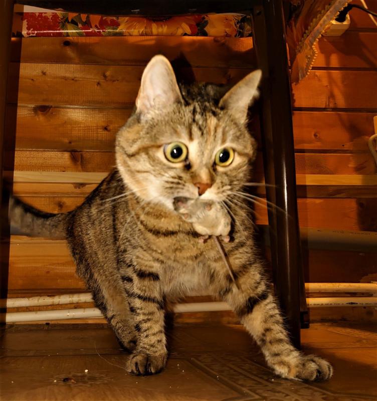 Канис и кошки 7.jpg