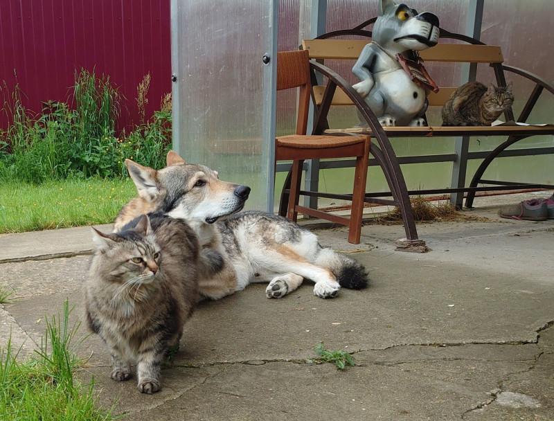 Канис и кошки 8.jpg