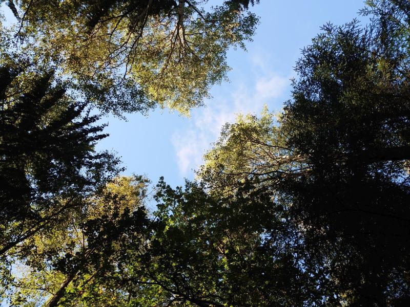 Лес 3 сентября 2021 5.jpg