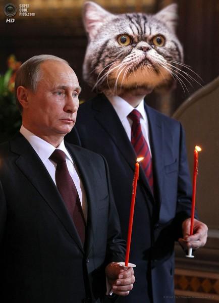 кот и скорбный путин