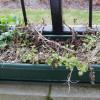 EPIC WEEDS