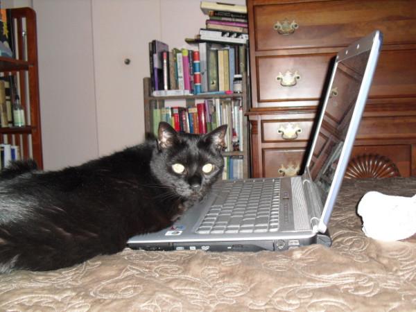 mojo on computer