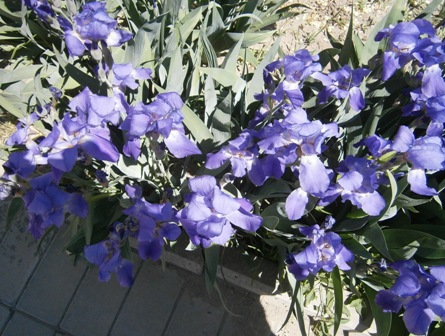 bluef1
