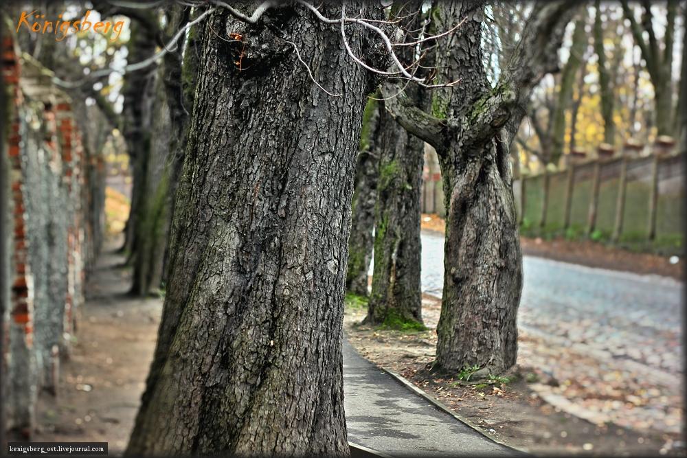 Деревья Кенигсберга