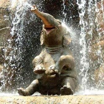 dovolen kak slon