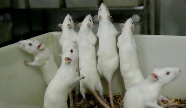 мыши 1