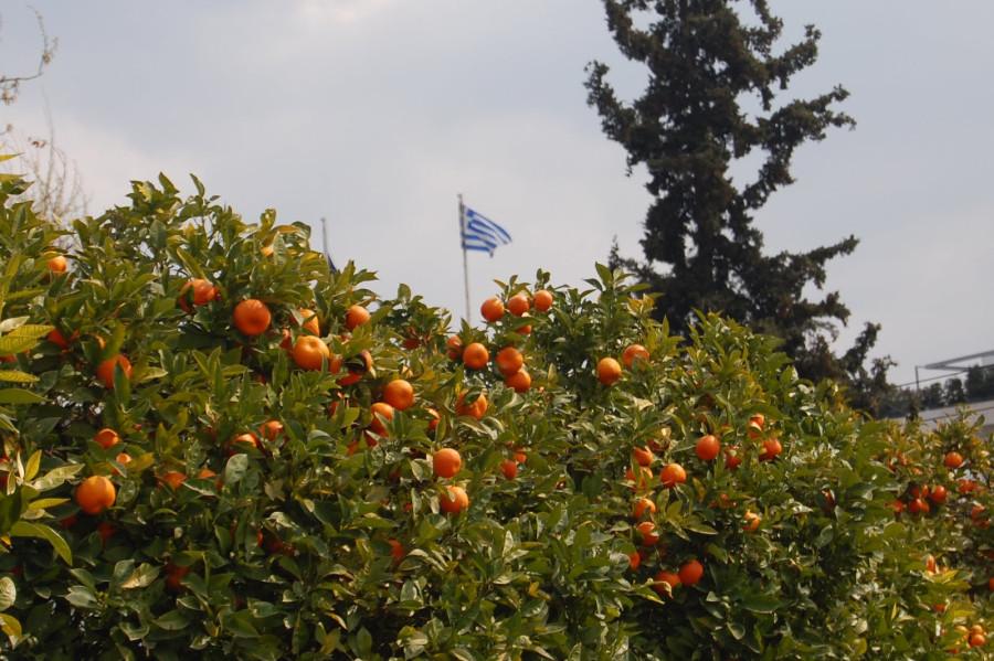 Афины 2011 086