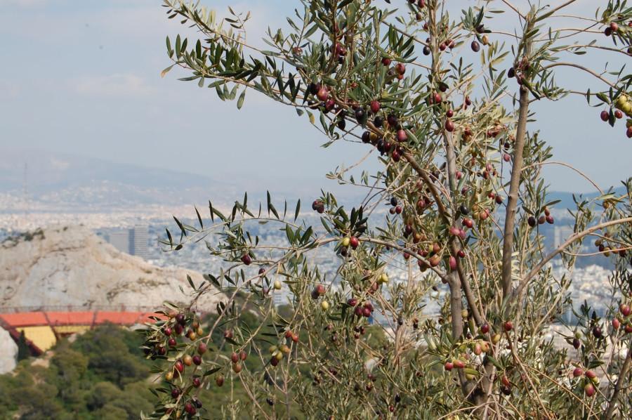 Афины 2011 195