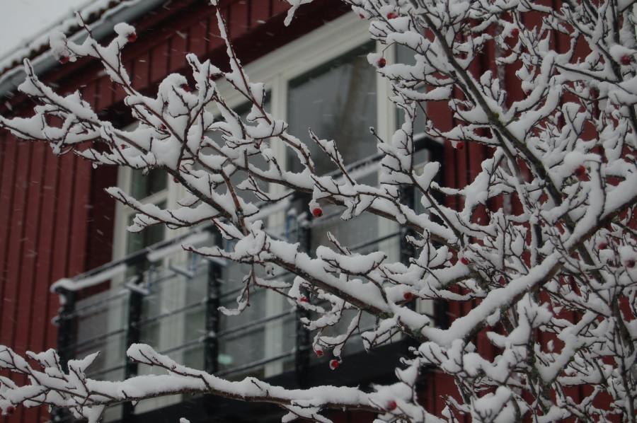 Норвегия 2012 056