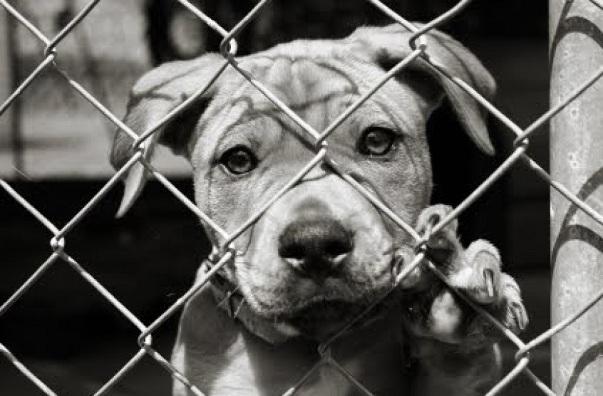 Homeless_dog