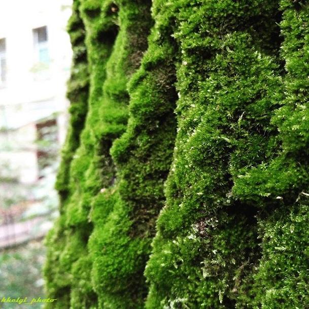 Тёплое_дерево