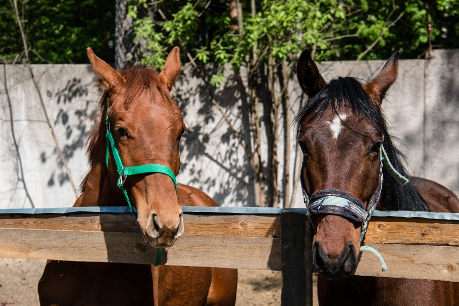 Horses_001