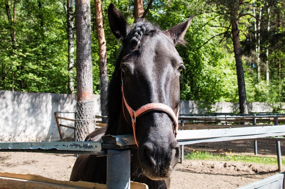 Horses_002