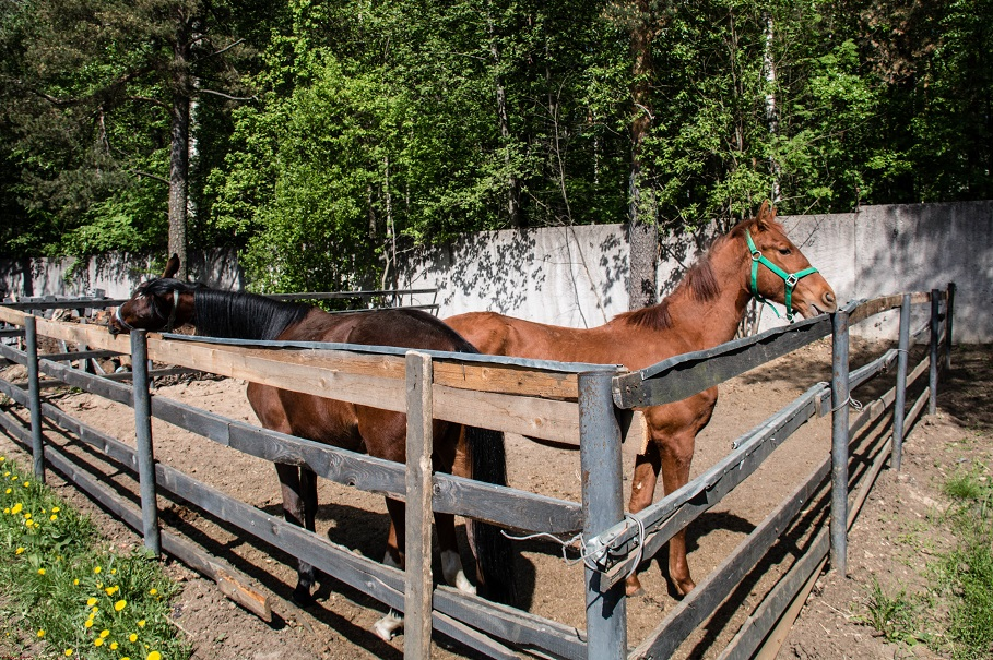 Horses_003