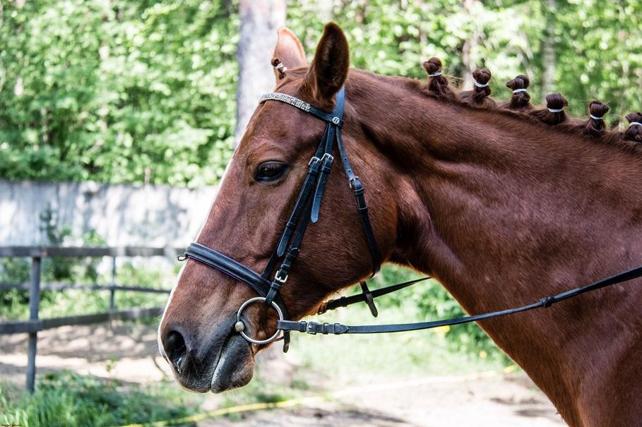 Horses_004