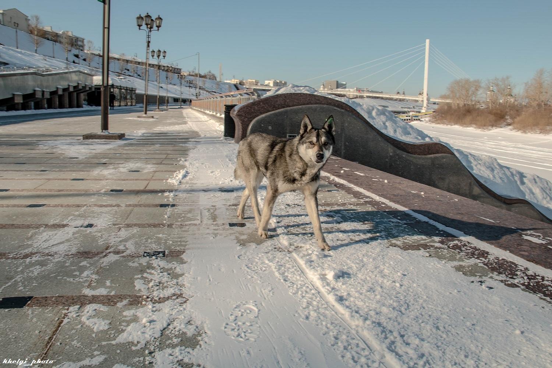Dog_Wolf_002