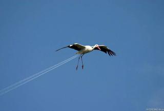 Jet Stork