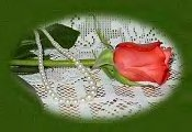 One Rose for Long Friendship