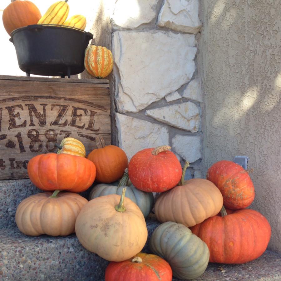 Pumpkins2013