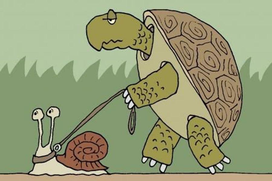 Черепаха смешной рисунок