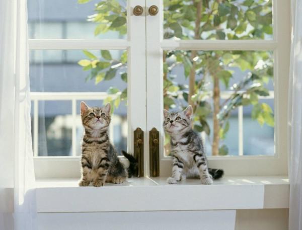 с кошками