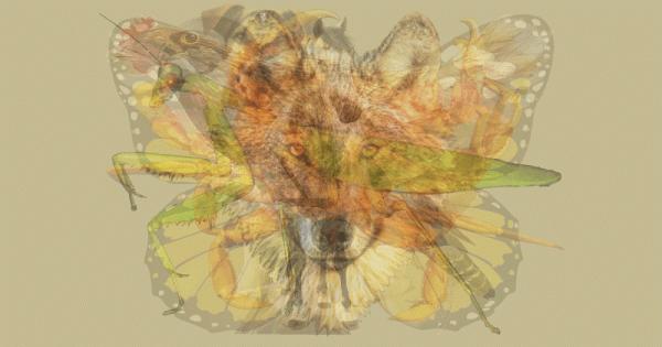Первое животное, которое вы видите на этой картинке, определит вашу личность