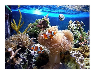 Know the basics of reef aquariums kidsaquariums different varieties prefer different types of lighting different levels of salinity and different space meeting these requirements is vital to make the publicscrutiny Images
