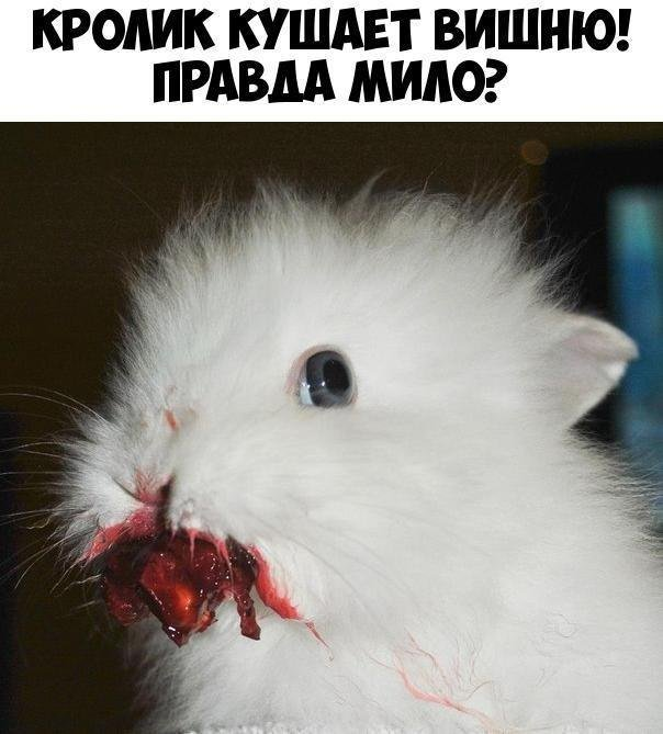 https://ic.pics.livejournal.com/kiiskinen/32639090/1313844/1313844_900.jpg