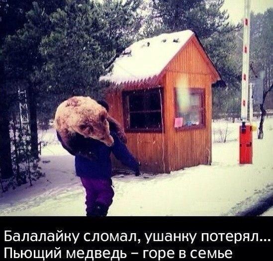 пьющий медведь