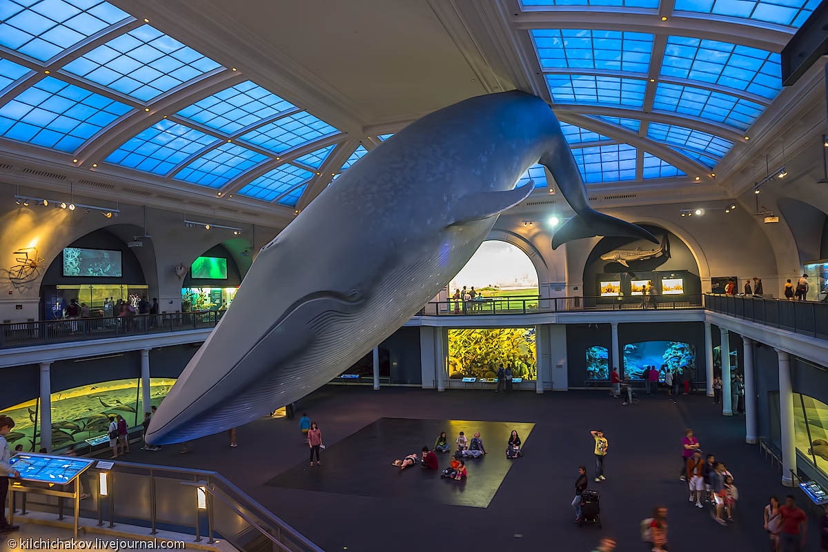 london whale article