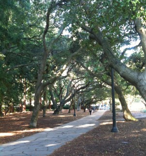 Path on the west side of the UC Berkeley campus, heading toward downtown Berkeley