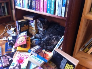 Cobweb's obsession with bookshelves