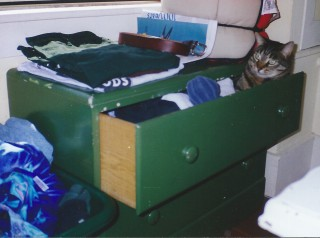 Cobweb inside my dresser drawer