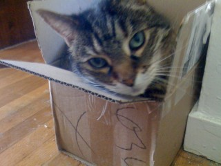 Cobweb in a small box