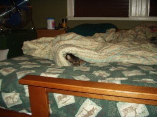 Cobweb in the bed