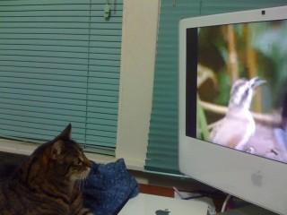 Cobweb watching Cat TV