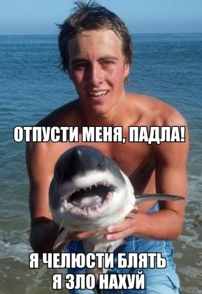акулёнок-челюсти-песочница-1040378