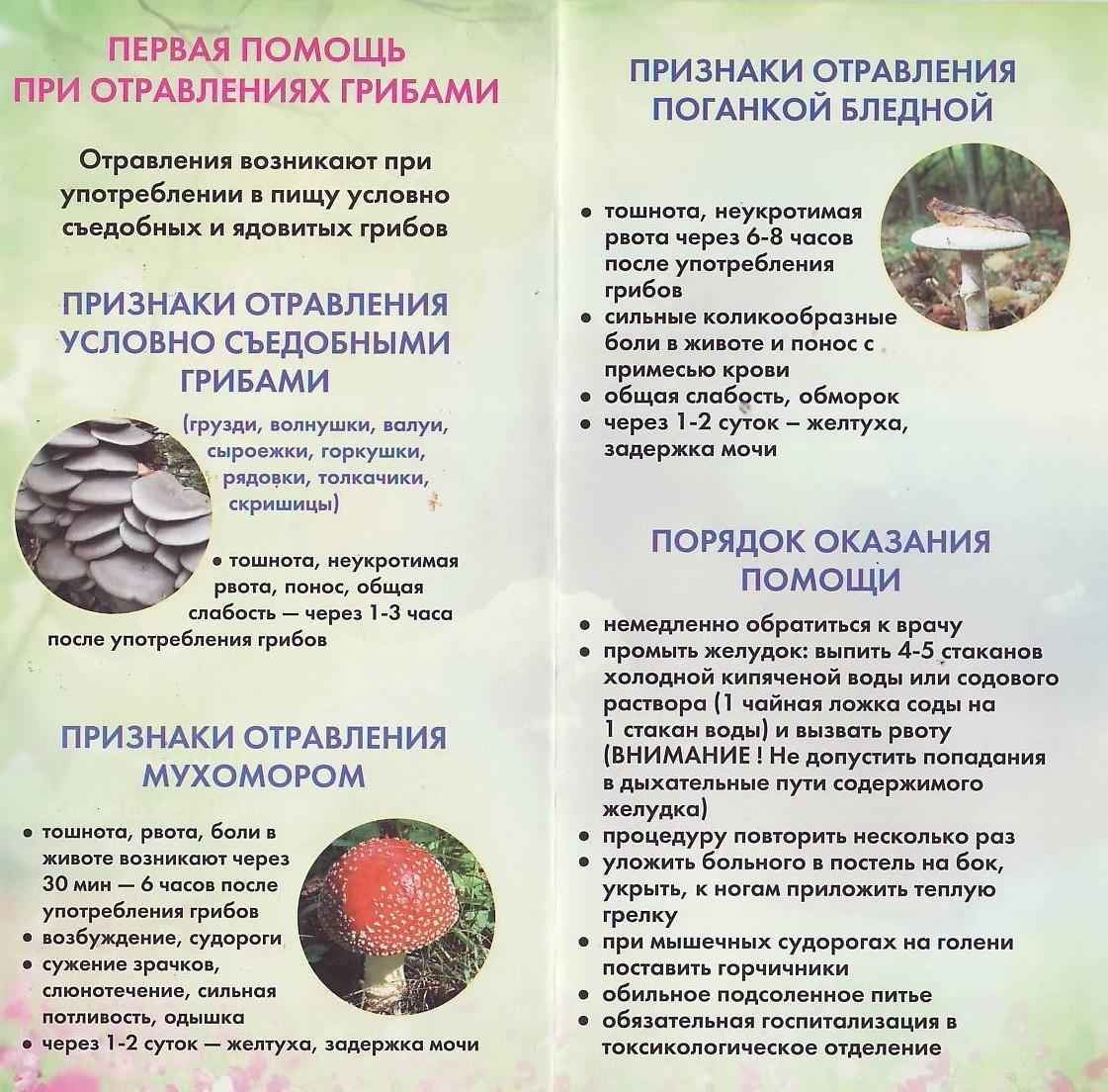 Реферат ядовитые растения первая помощь при отравлении Другие признаки испорченных продуктов изменение цвета вкуса и консистенции Отравление может наступит даже после употребления нормального на внешний вид