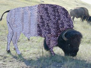 bison-fish.