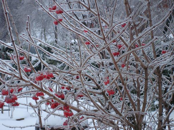Зима 10.jpg