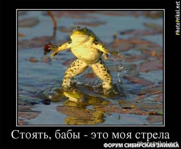 Лягушки 2.jpg