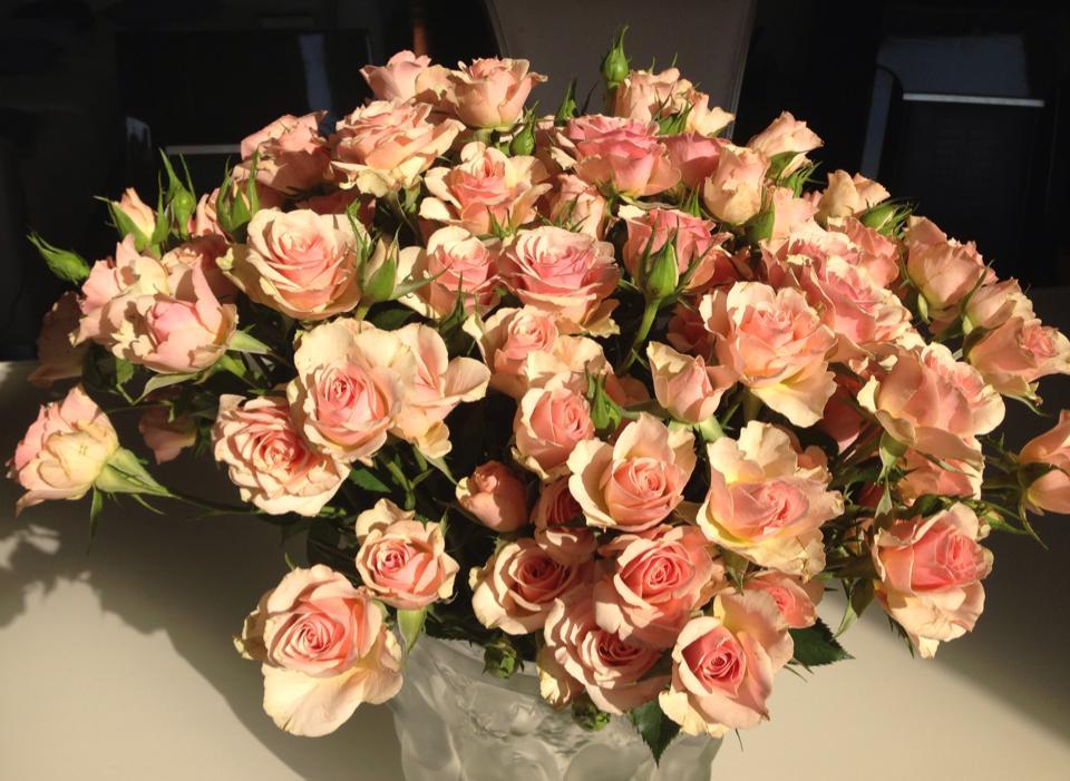 pascha roses2