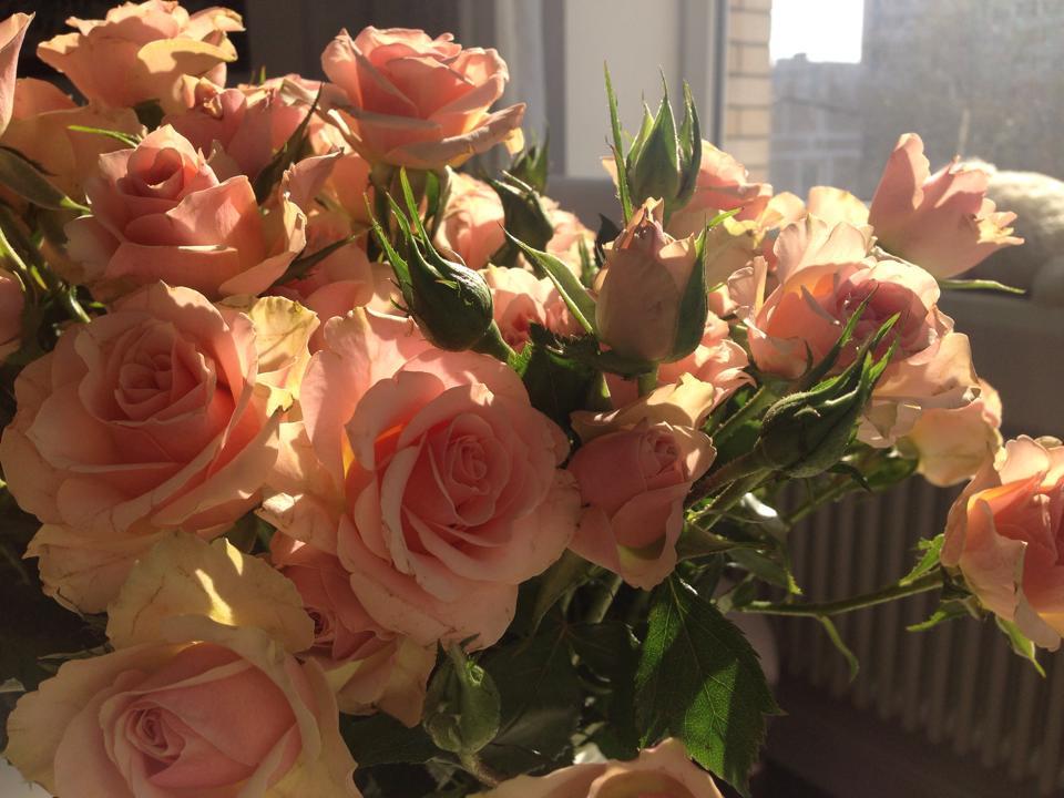 pascha roses1