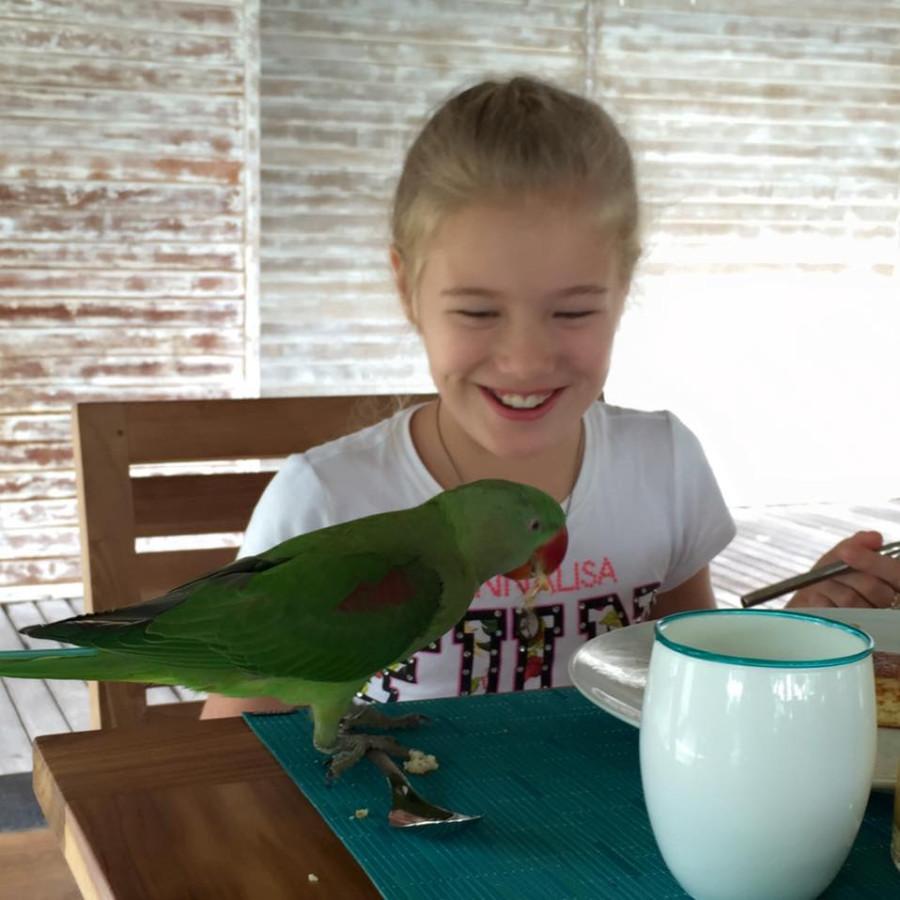 tiun parrot