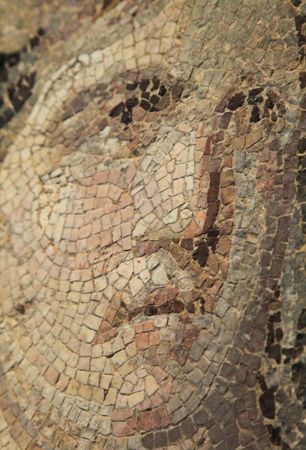 daphne mosaic close up