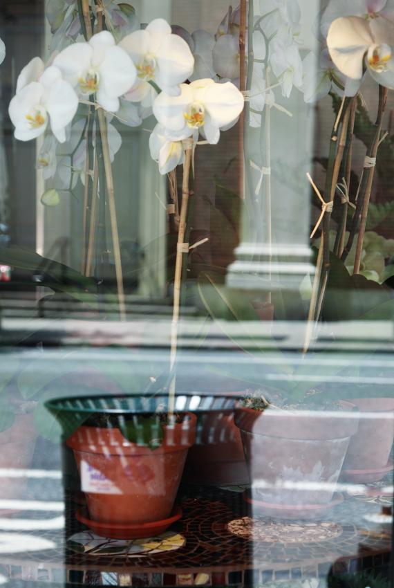 double orchide